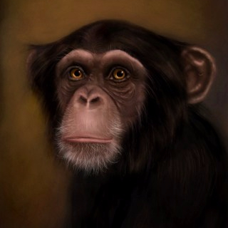 cropped-scott-douglas-chimpanzee